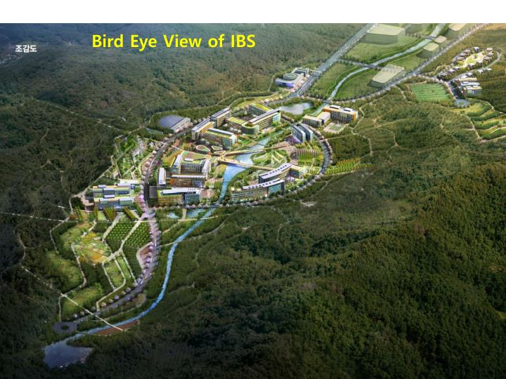 Bird Eye View of IBS