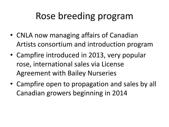 Rose breeding program