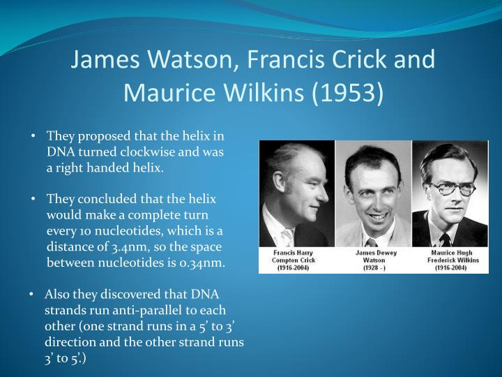 James Watson, Francis Crick and Maurice