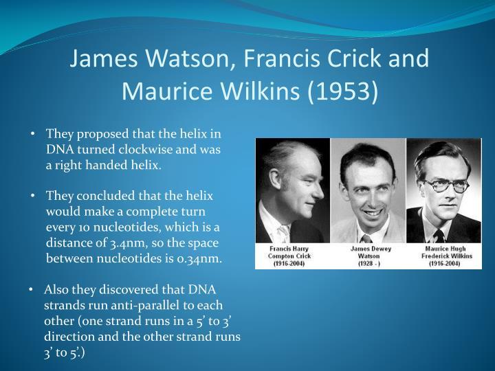 James Watson, Francis Crick and Maurice
