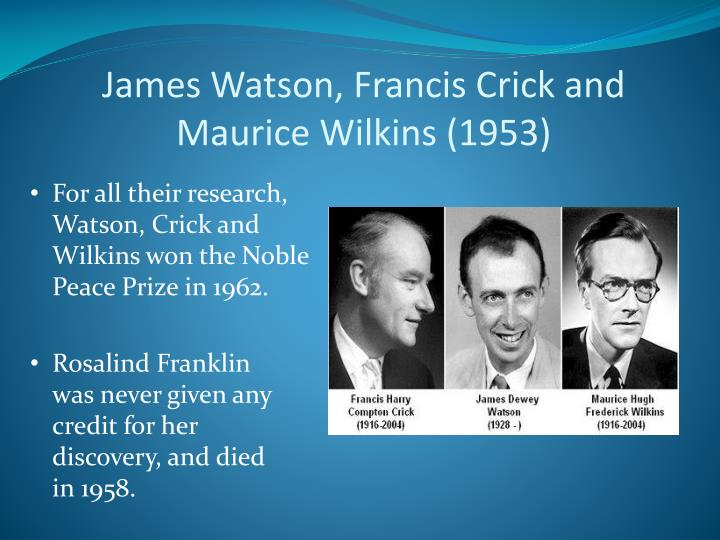 James Watson, Francis Crick and Maurice Wilkins (1953)