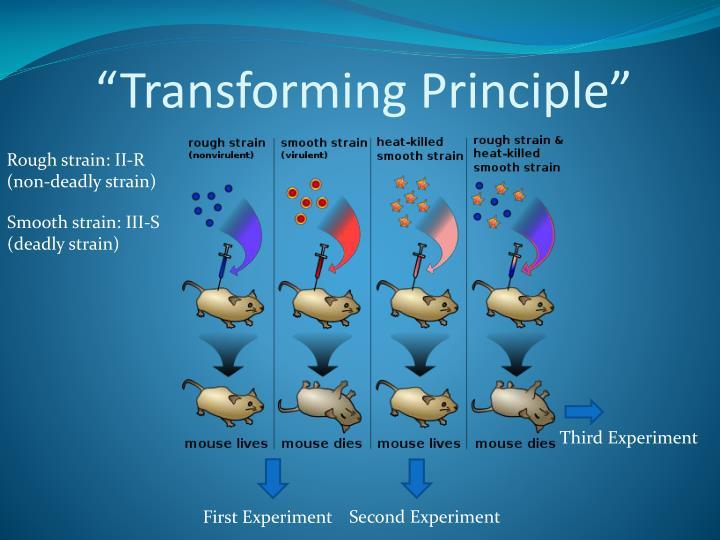 """""""Transforming Principle"""""""