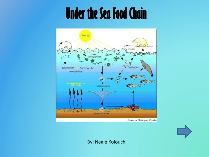Under the Sea Food Chain