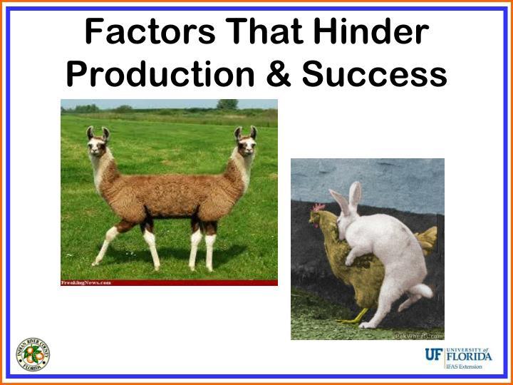 Factors That Hinder Production & Success