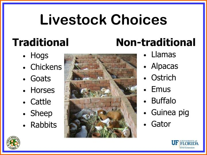 Livestock Choices