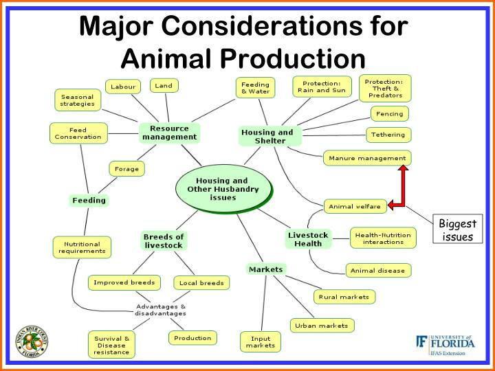Major Considerations for Animal Production