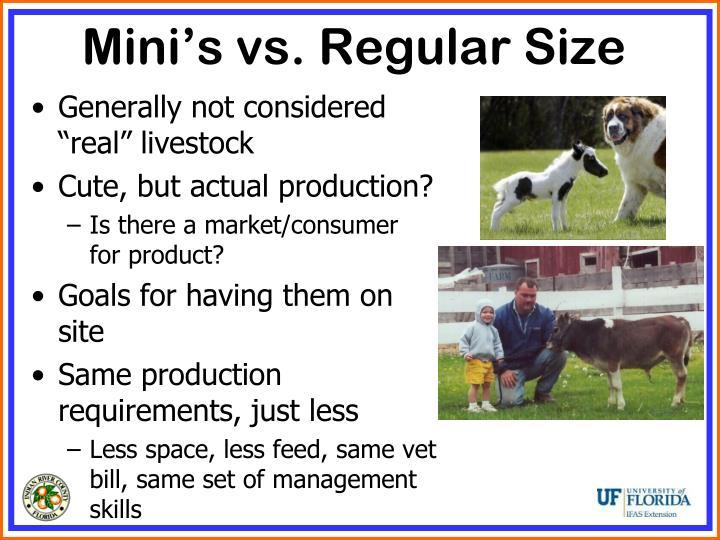 Mini's vs. Regular Size