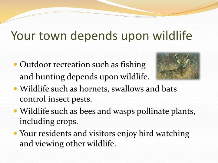 Your town depends upon wildlife