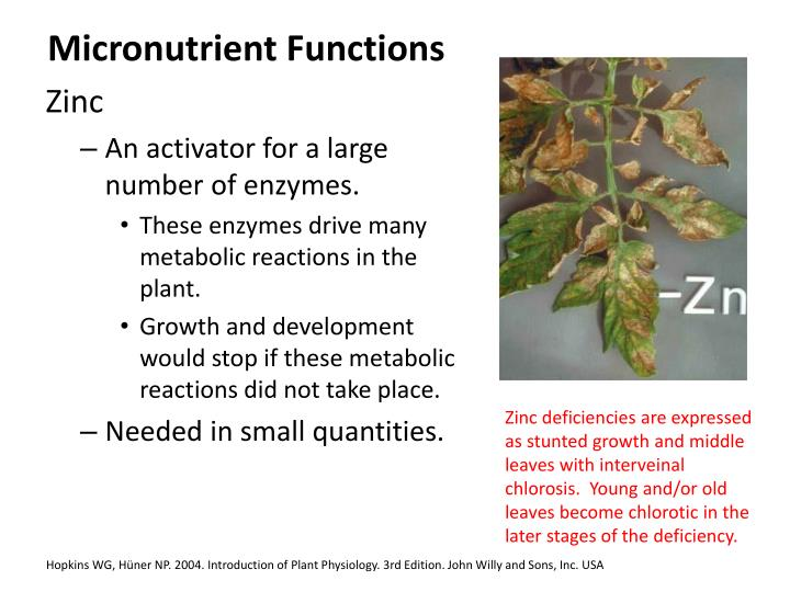 Micronutrient Functions