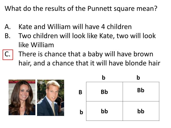 What do the results of the Punnett square mean?