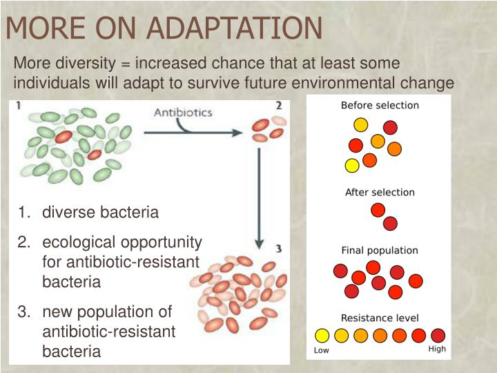 MORE ON ADAPTATION