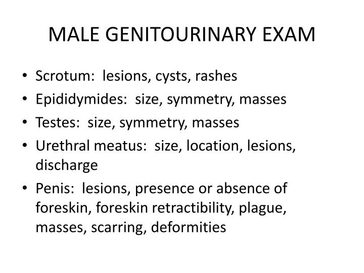 MALE GENITOURINARY EXAM