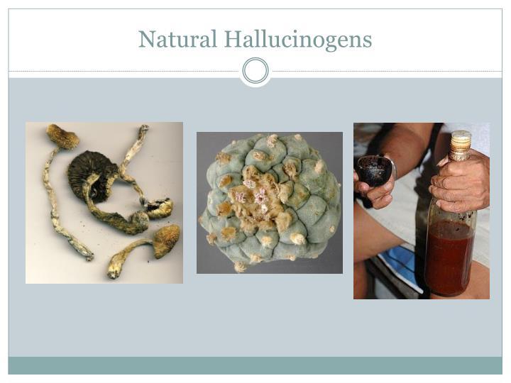 Natural Hallucinogens