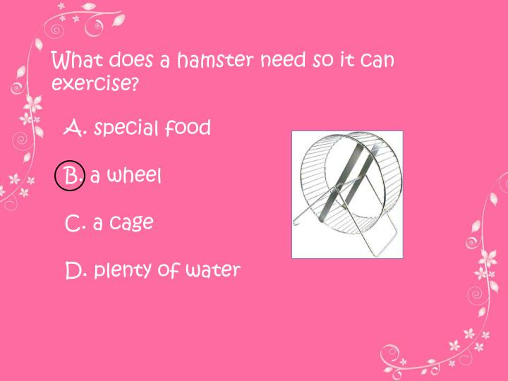 What does a hamster need so it can exercise?