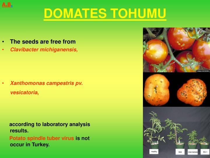 DOMATES TOHUMU