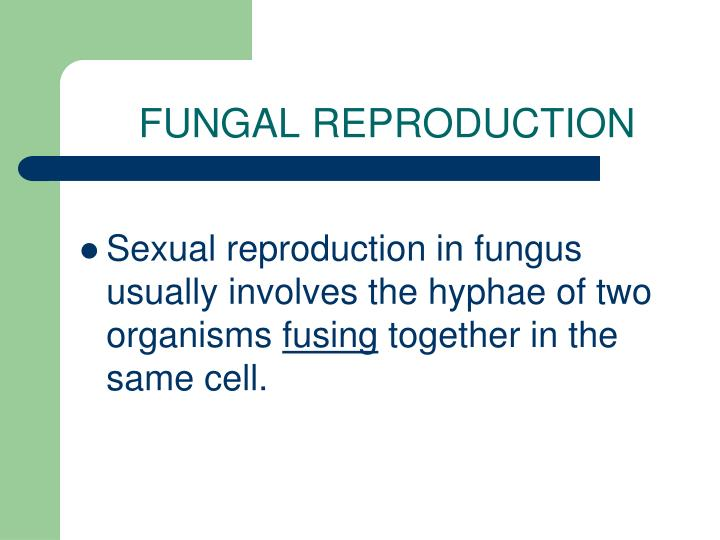 FUNGAL REPRODUCTION