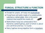fungal structure function
