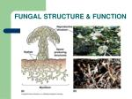 fungal structure function1