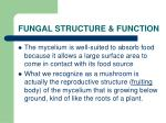 fungal structure function2