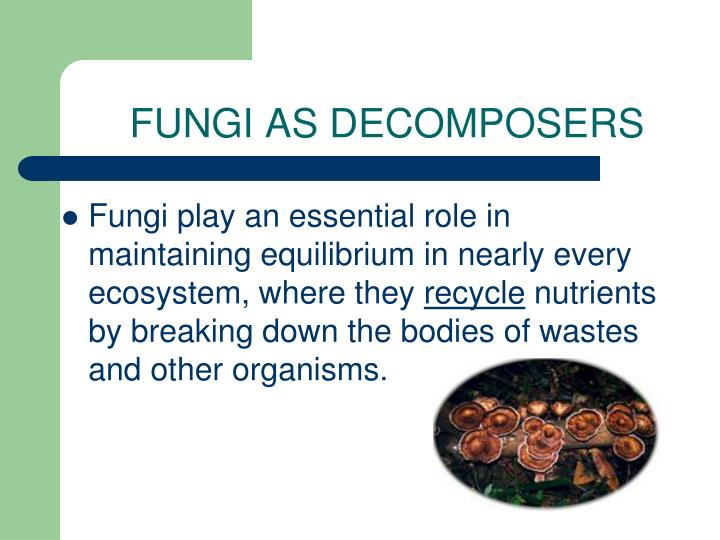 FUNGI AS DECOMPOSERS