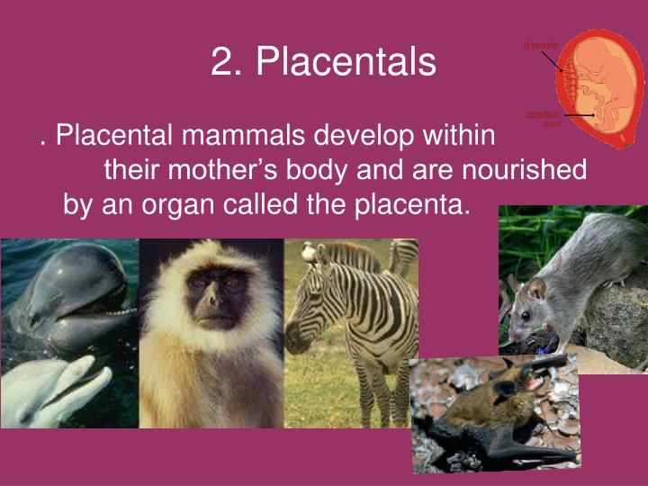2. Placentals