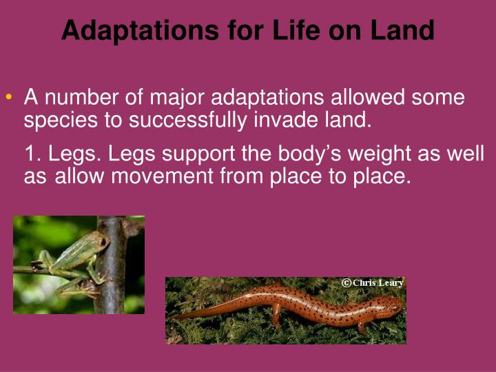 Adaptations for Life on Land