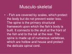 musculo skeletal