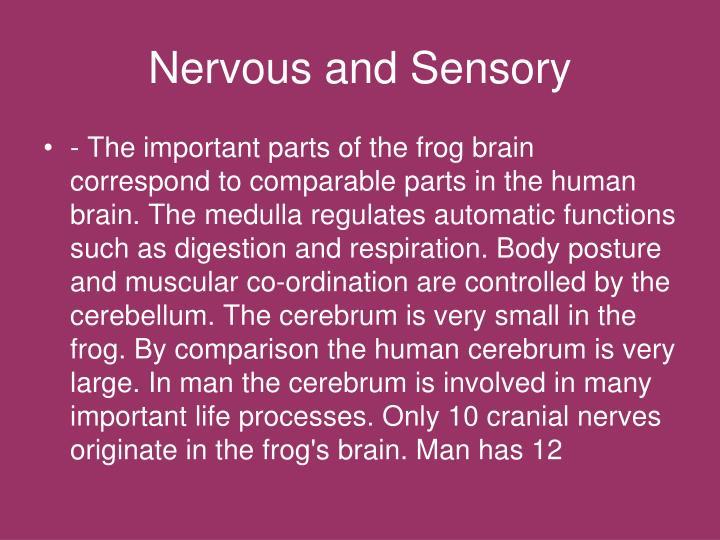 Nervous and Sensory