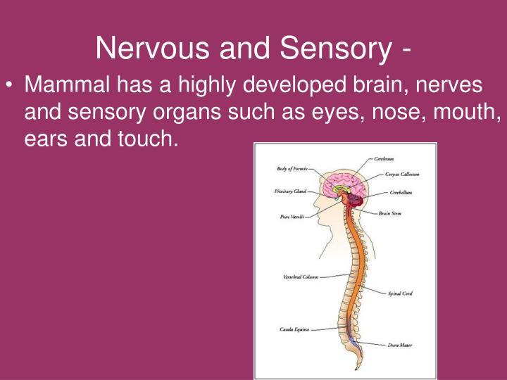 Nervous and Sensory -