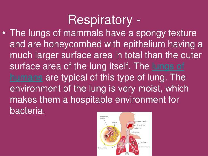 Respiratory -