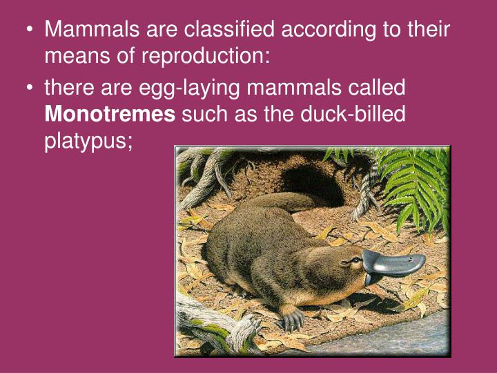 Mammals are classified according to their means of reproduction: