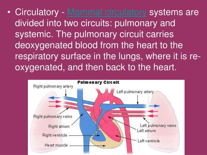 Circulatory -