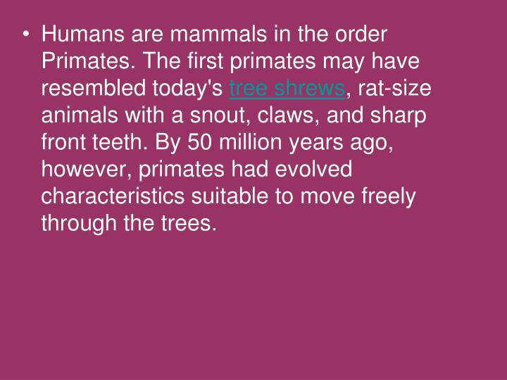 Humans are mammals in the order Primates. The first primates may have resembled today's