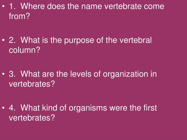 1.  Where does the name vertebrate come from?
