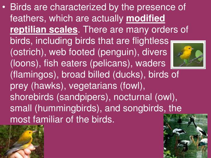 Birds are characterized by the presence of feathers, which are actually