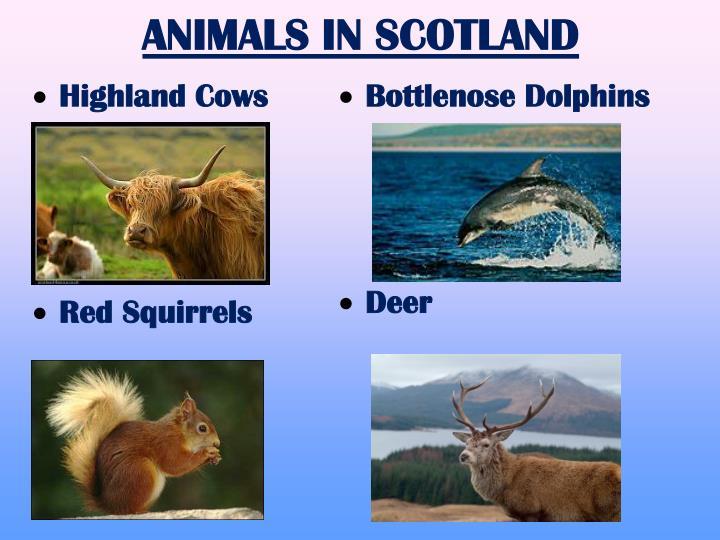 ANIMALS IN SCOTLAND