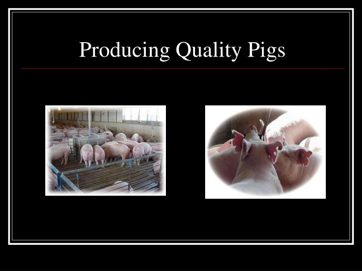 Producing Quality Pigs