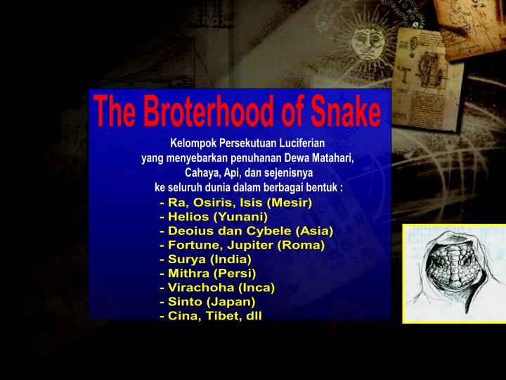 The Broterhood of Snake