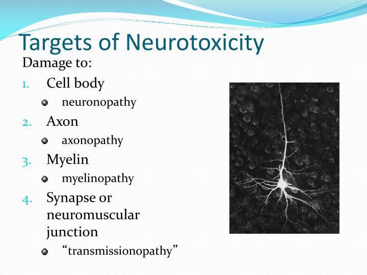 Targets of Neurotoxicity