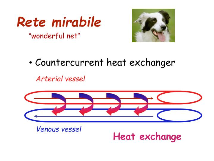 Arterial vessel