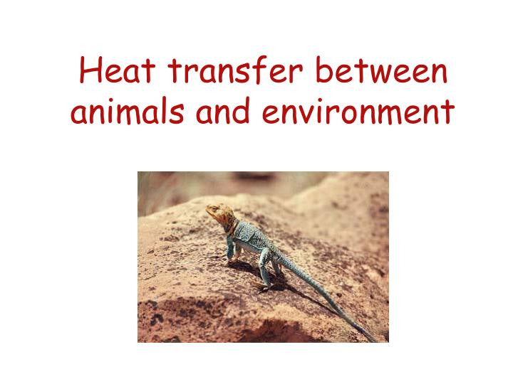 Heat transfer between animals and environment