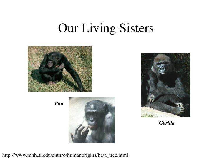Our Living Sisters