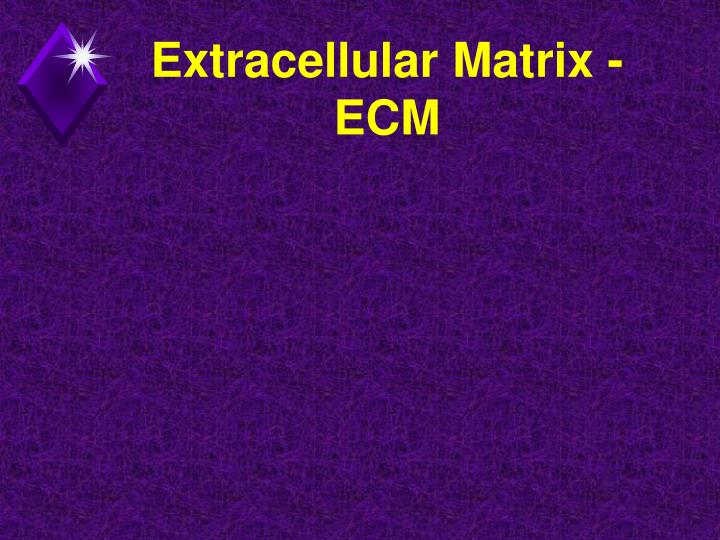 Extracellular Matrix - ECM