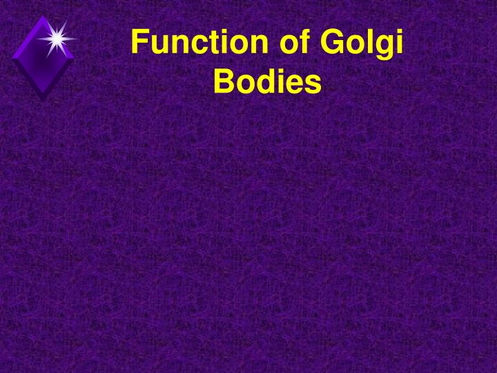 Function of Golgi Bodies