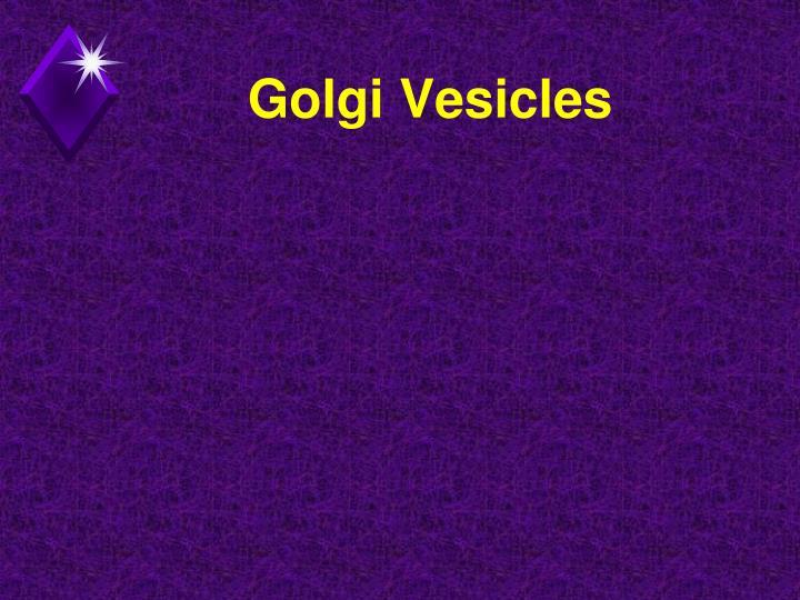 Golgi Vesicles