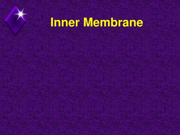 Inner Membrane