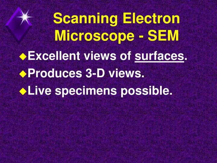 Scanning Electron Microscope - SEM