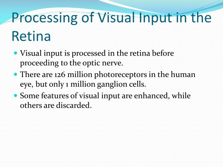 Processing of Visual Input in the Retina