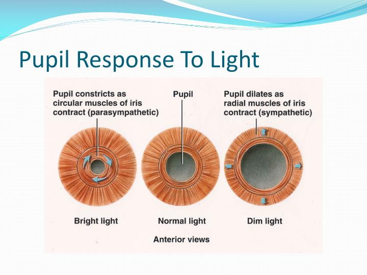 Pupil Response To Light