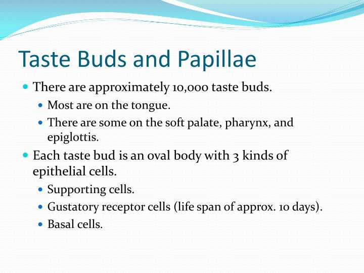 Taste Buds and Papillae